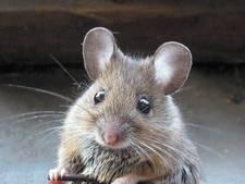 Niemand wil een 'grijze muis' zijn