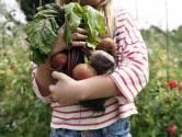 Aménager un potager? Succès garanti avec ces 5 fruits et légumes