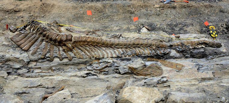 De staart van de Tlatolophus. Beeld AP