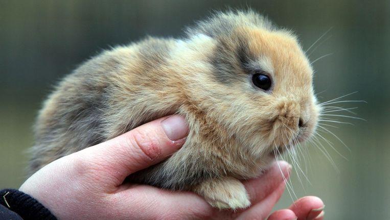 Til, het onfortuinlijke konijntje. Beeld AP