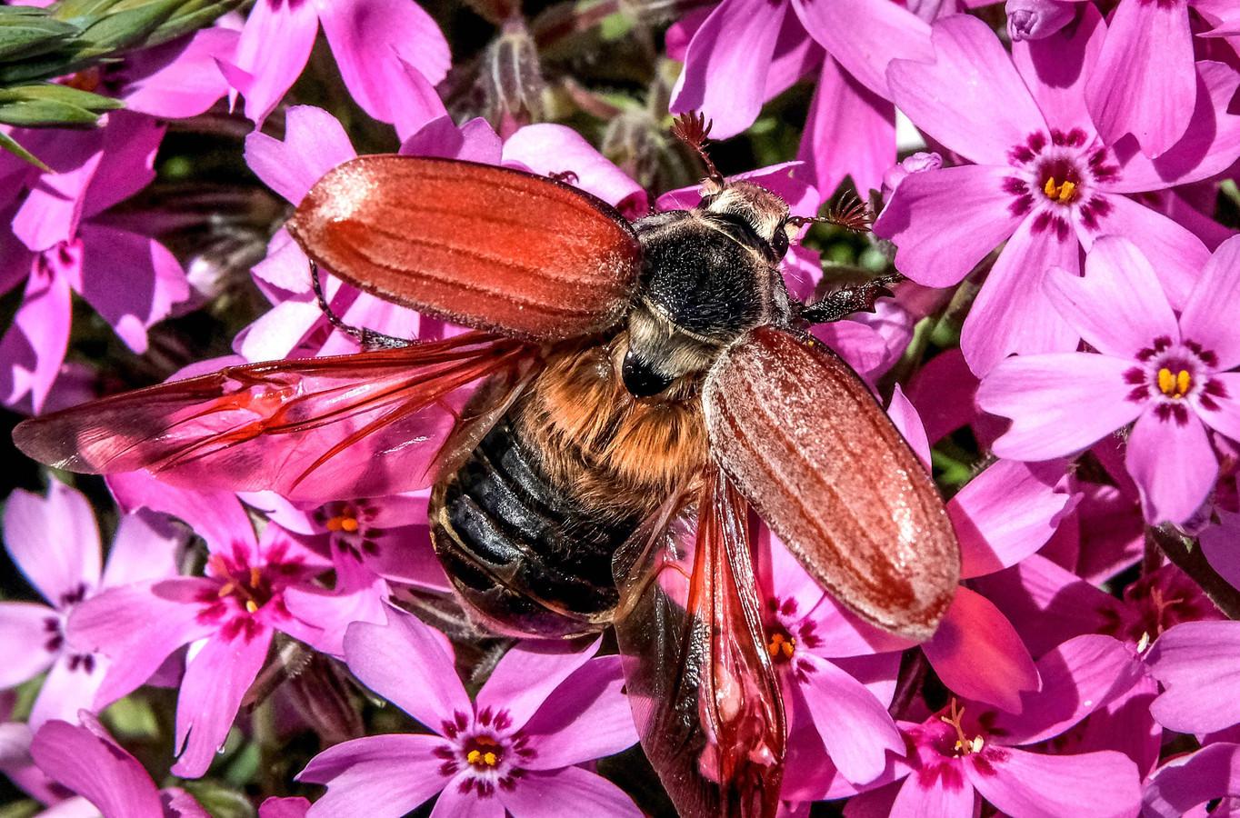 Door de lange periode van koud weer hebben veel insecten het voorjaar niet overleefd.