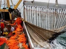 Minister Schouten wil af van verbod op pulsvisserij en stapt naar Europees Hof: 'Dit is onrecht'