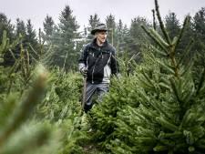 Dit dorp krijgt een kerstbomenbos: 'Kerstboom eruit, bos erin'