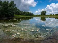 Scheuren in huizen en dode vissen: zelfs 'nat' rivierengebied gaat gebukt onder de droogte
