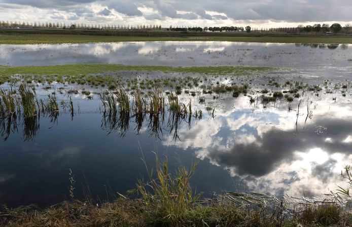 De Noorderdiepzone is een natte natuurstrook in Polder De Biesbosch.