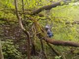 Wandelaar wil rivier oversteken via omgevallen boom maar belandt in water