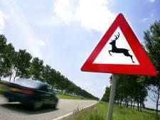 Gemiddelde een doodgereden ree per dag in Flevoland, Rietweg bij Lelystad lijkt 'hotspot'