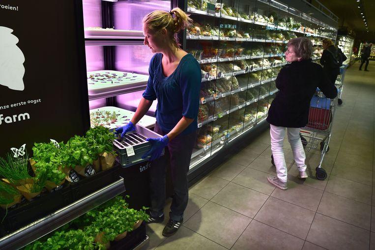 Albert Heijn plaatst kleine plantjes in een kas zodat de klant het product ziet groeien.  Beeld Marcel van den Bergh