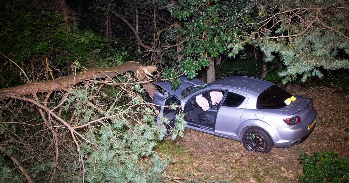 File op A28 bij Harderwijk na eenzijdig ongeval: auto velt boom, bestuurder ernstig gewond.