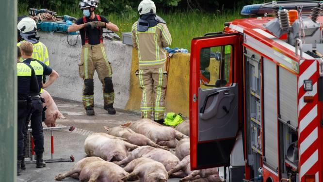 Vrachtwagen met varkens gekanteld op Antwerpse Ring: weg volledig versperd