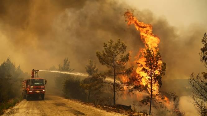 Kwik blijft stijgen terwijl Turkije tegen dodelijke bosbranden vecht