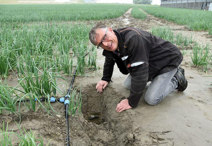 Akkerbouwer José Waverijn toont ondergronds irrigatiesysteem op veertig centimeter diepte dat hij voor het tweede jaar aan het beproeven is op één hectare land.
