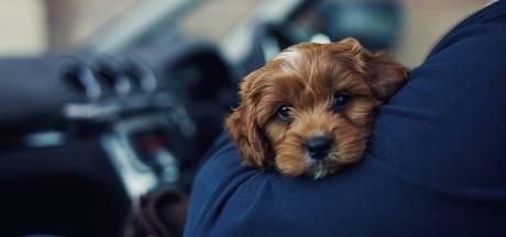 """""""Uber Pet"""" est lancé à Bruxelles: vos animaux peuvent désormais faire le trajet avec vous"""