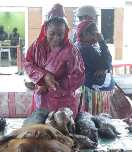 Le Gabon interdit la consommation de pangolin et de chauve-souris