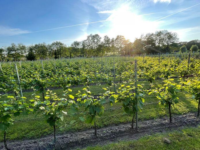 Eén van de drie wijngaarden die bezocht kan worden tijdens de toer.