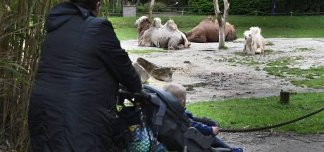 Aapjes kijken in Zoo Parc in Overloon zorgt voor blije gezichten