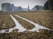 Les pommes de terre et les frites bientôt plus chères à cause des inondations?