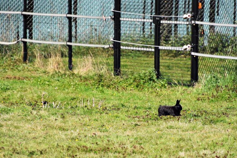 Een konijn ligt op de loer aan de kant van het plein.