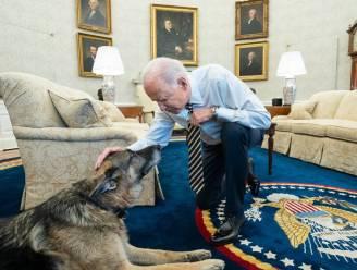 """President Biden treurt om overlijden herdershond Champ (13): """"Zullen hem eeuwig missen"""""""