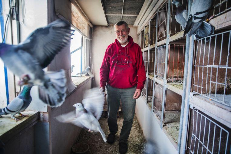 Oreil Focquart (70) is sinds zijn vijftiende met duiven in de weer. Beeld Aurélie Geurts