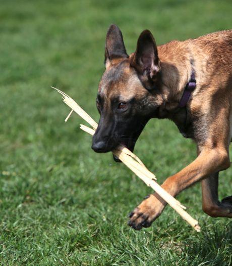 Baasje kon Mechelse herder Purdy (2) niet meer betalen en liet haar achter aan een boom in het park