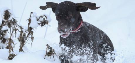 Blaffende honden redden twee slachtoffers van lawine in Zwitserland