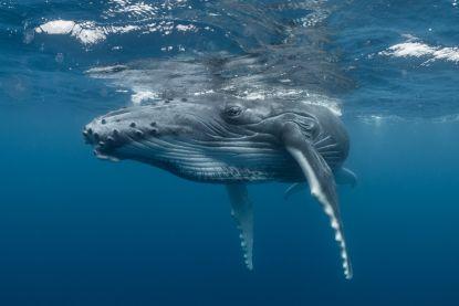 Oceanen kunnen in 30 jaar tijd volledig herstellen, mits uitgebreide maatregelen