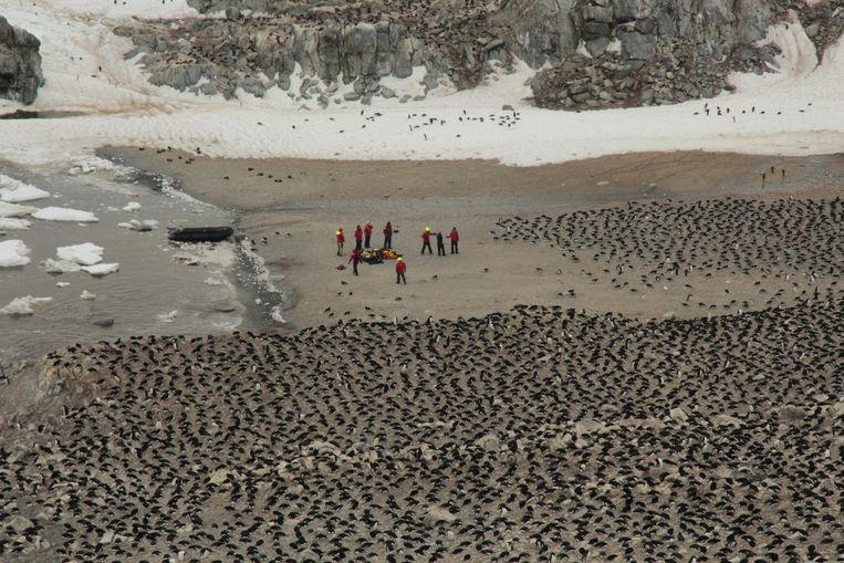 De onderzoekers te midden van de kolonie. Beeld Woods Hole Oceanographic Institution