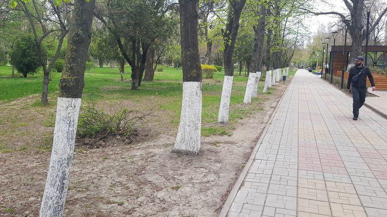 In een park in de provincieplaats Machatsjkala zijn bomen wit geverfd. Waarom eigenlijk, vragen velen zich af.  Beeld Tom Vennink