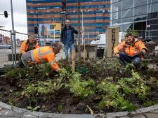 3500 tegels maken plaats voor planten aan het Marconiplein