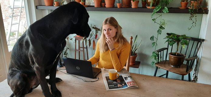 Voor Twingo kan het thuiswerken niet lang genoeg duren. En voor zijn baasje Fee Buurmans is het werken met Twingo aan haar voeten een van de grote voordelen van het werken in de woonkamer. Soms wil de  Deense dog-mix een poot toesteken bij het bijhouden van onze website.