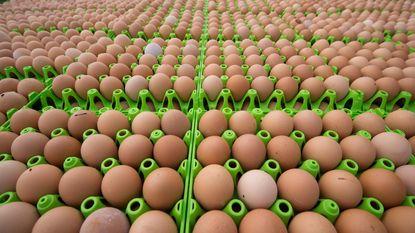 Voedingssector slaat alarm over eiertekort