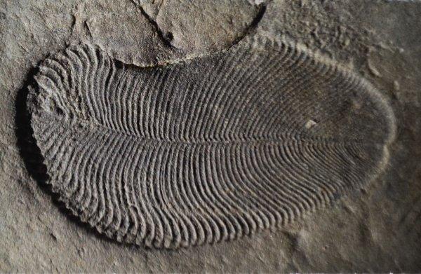 Deze kledder weefsel, het vroegste dier op aarde, werpt nieuw licht op evolutie van dieren