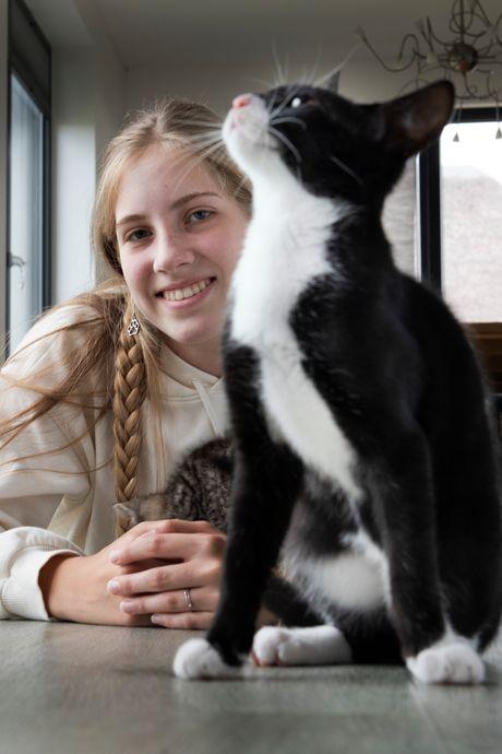 Stichting zoekt gastgezinnen voor 'lastige' kittens: 'Gedumpte kittens hebben een achterstand'