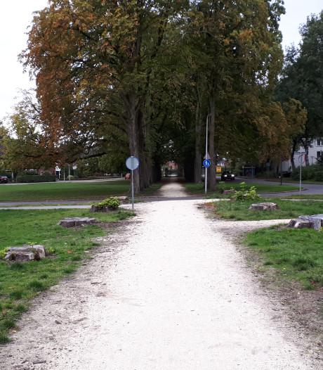 Zieke bomen Kastanjelaan in Enschede maken plaats voor lindes