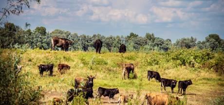 Slagerij van horecagroothandel gaat zelf vlees testen op dioxine: 'Hopelijk is er snel meer duidelijk'