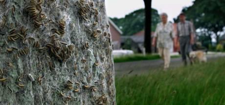 Honderden nestkasten opgehangen in strijd tegen eikenprocessierups