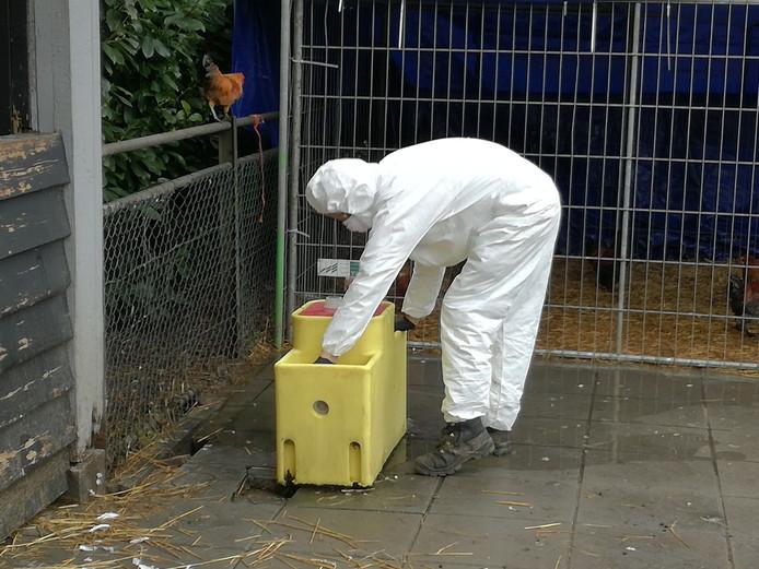 Op dit moment wordt onderzoek gedaan naar de duiven in het Wantijpark.