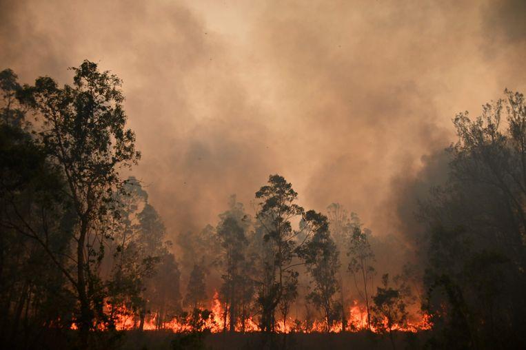 Bosbrand in Bobin, Australië in november 2019.  Beeld AFP