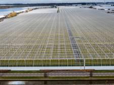 Aardwarmteproject Maasdijk snel van start