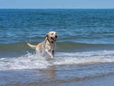 Honden het hele jaar vrij spel op strand De Punt bij de Oosterscheldekering: 'Maar gooi je bal niet te ver'