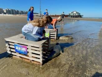 Net voor grote heropening laat Sea Life Blankenberge nog twee zeehondjes vrij