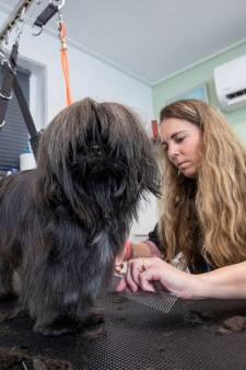 Trimsalons tóch weer open: hond Joy kan haar geluk niet op