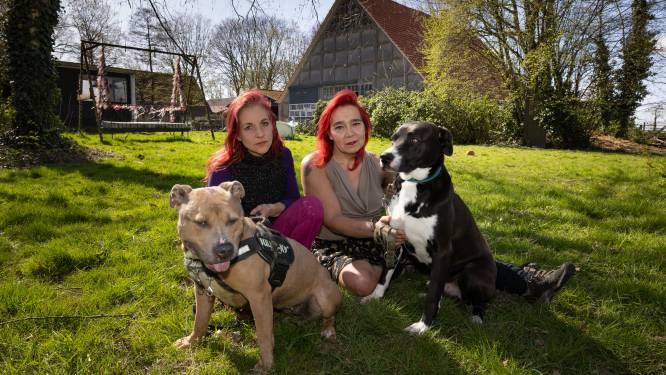 Zestien vechthonden, wie wil ze hebben? Hondenopvang Stella kan de kosten niet meer opbrengen