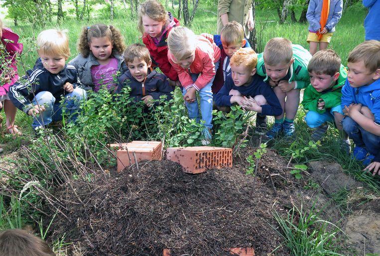 De leerlingen kijken gefascineerd toe hoe de mieren kriskras door elkaar lopen.