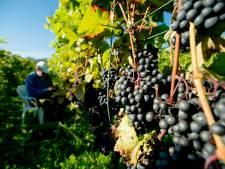 Weg bijna vrij voor tweede Dordtse wijnboerderij