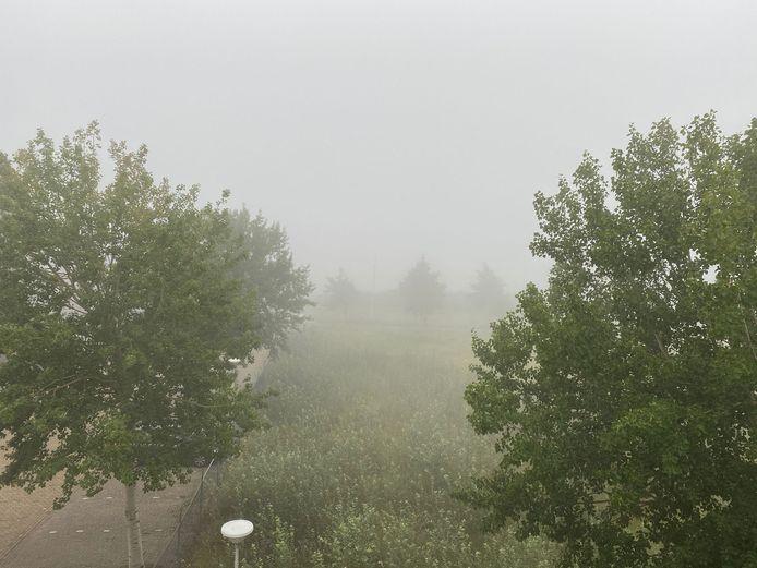 Dichte mist.