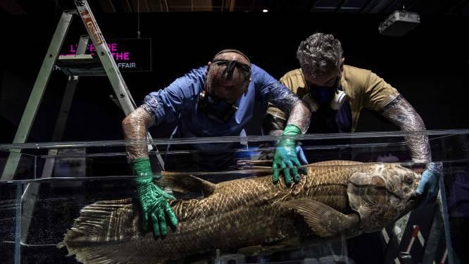Vis die al sinds prehistorie bestaat, kan 100 jaar worden en is 5 jaar zwanger