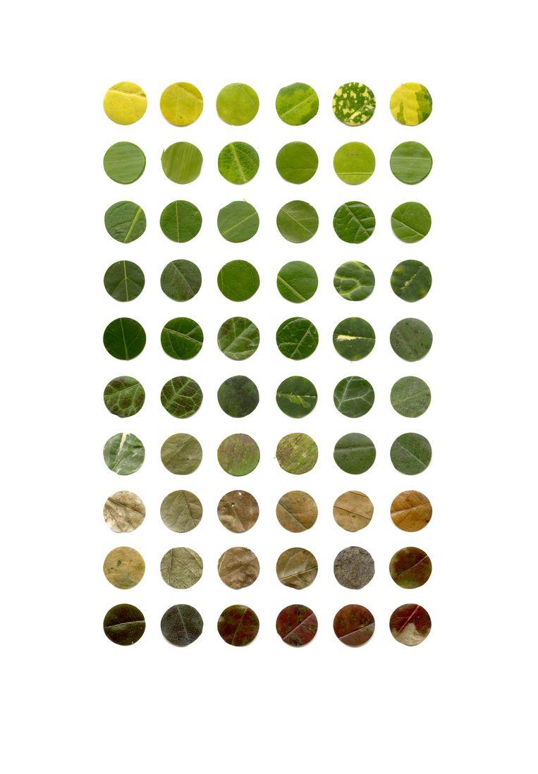 Colour Analysis, Galerie Caroline O'Breen, t/m 1 juni. Beeld Anne Geene