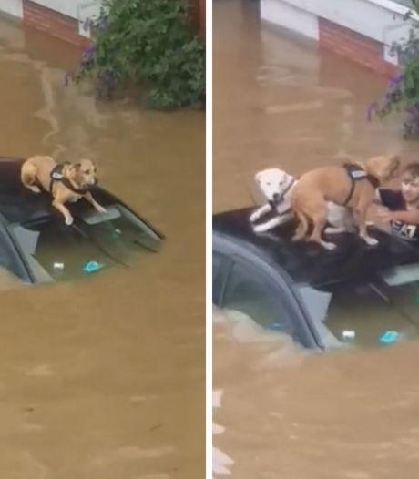 Des chiens sauvés des inondations à Verviers